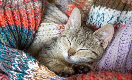 Kitten in woolen clothes
