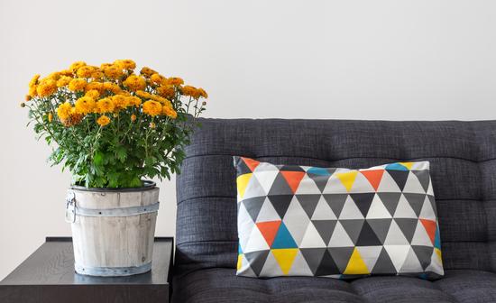Orange plant in pot